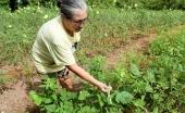 Governador sanciona Fethab e garante R$ 20 milhões para agricultura familiar